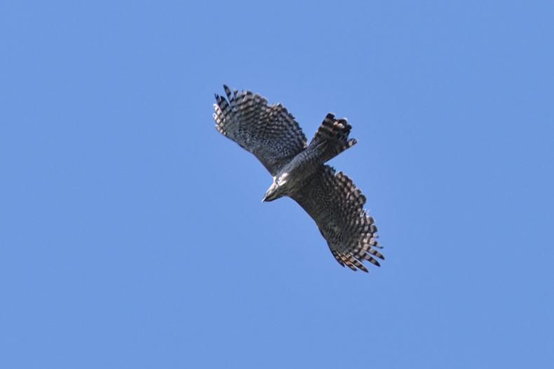 クマタカと他の鳥たち_f0053272_1035581.jpg