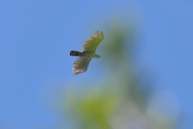 クマタカと他の鳥たち_f0053272_1042465.jpg