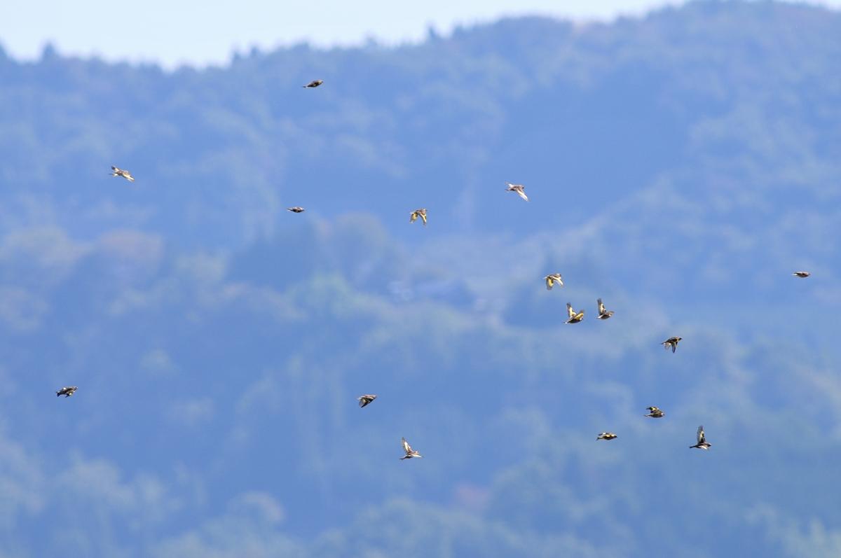 クマタカと他の鳥たち_f0053272_10551432.jpg