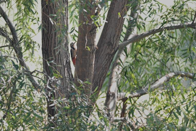 クマタカと他の鳥たち_f0053272_1104927.jpg