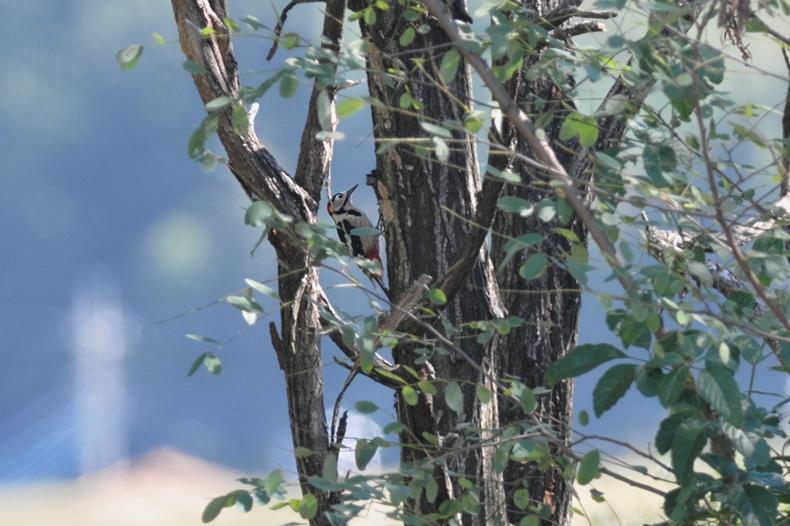 クマタカと他の鳥たち_f0053272_1111094.jpg