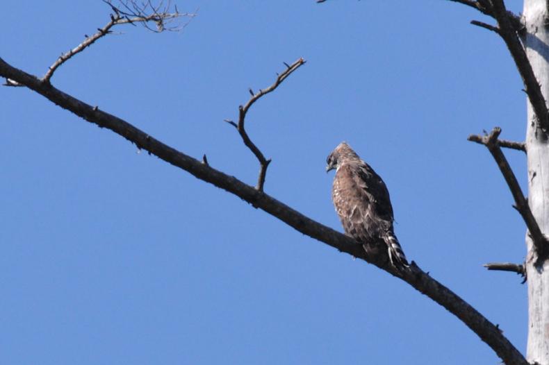 クマタカと他の鳥たち_f0053272_944813.jpg