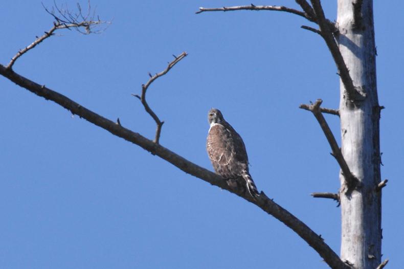 クマタカと他の鳥たち_f0053272_9451587.jpg