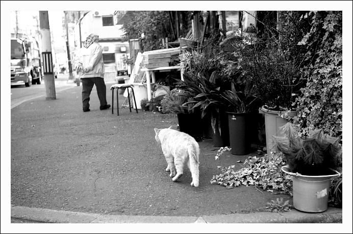 カメラを見ようとしない猫たち_c0170584_2249670.jpg