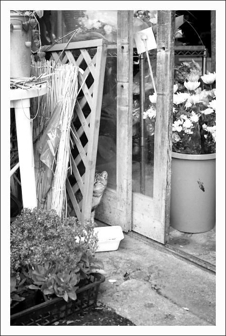 カメラを見ようとしない猫たち_c0170584_231616.jpg