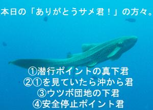 絶壁→沈船→隠れ根 ダイブ♪♪♪_f0144385_2311015.jpg