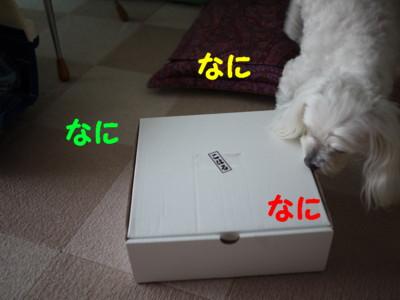 f0145192_1614585.jpg
