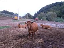 お肉を買いに行きました_f0106597_1656162.jpg