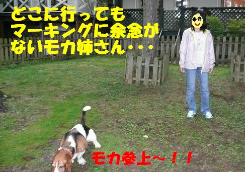 f0121712_841751.jpg