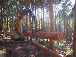 低投資型小規模林業_e0002820_6223859.jpg
