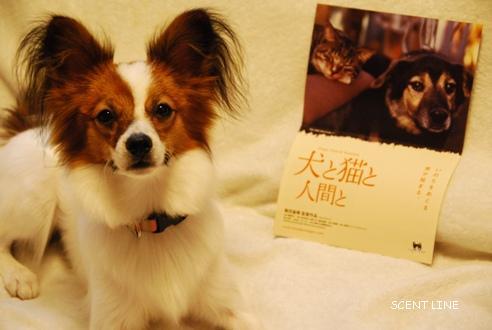 映画 「犬と猫と人間と」_c0099133_8454281.jpg
