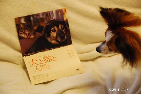 映画 「犬と猫と人間と」_c0099133_8455150.jpg