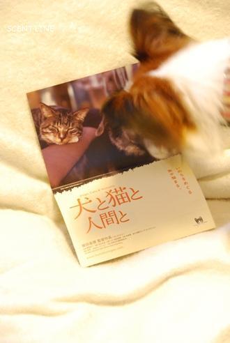 映画 「犬と猫と人間と」_c0099133_846066.jpg