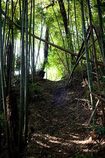 2009/10/16 梶ケ谷から溝の口まで_b0171364_12121531.jpg