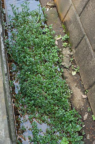 2009/10/16 梶ケ谷から溝の口まで_b0171364_12244753.jpg