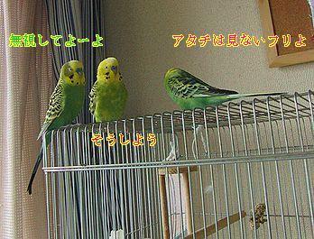 f0196665_043970.jpg