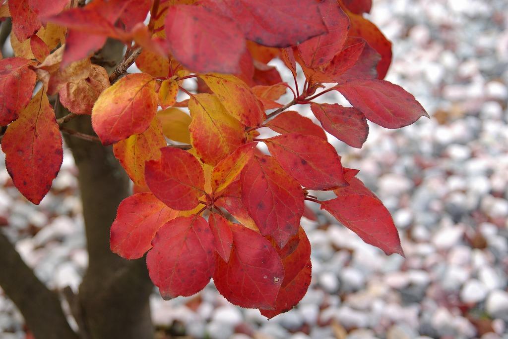 秋色に染まる_a0107184_9325943.jpg