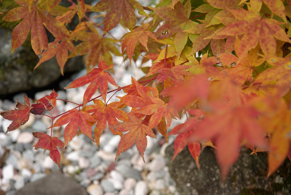 秋色に染まる_a0107184_9333066.jpg