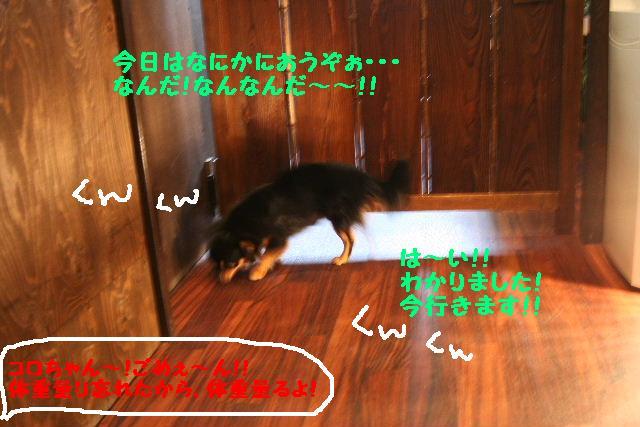 b0130018_1917078.jpg
