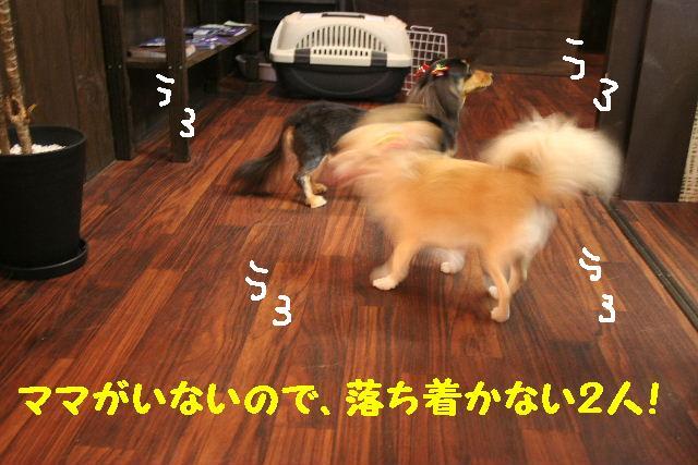 b0130018_19194392.jpg