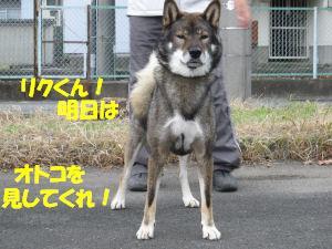 f0143123_20565575.jpg
