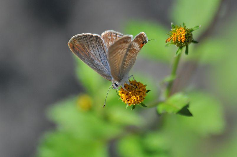 10月10日(晴れ)タイトル:和歌山の蝶その2_f0105542_1122451.jpg
