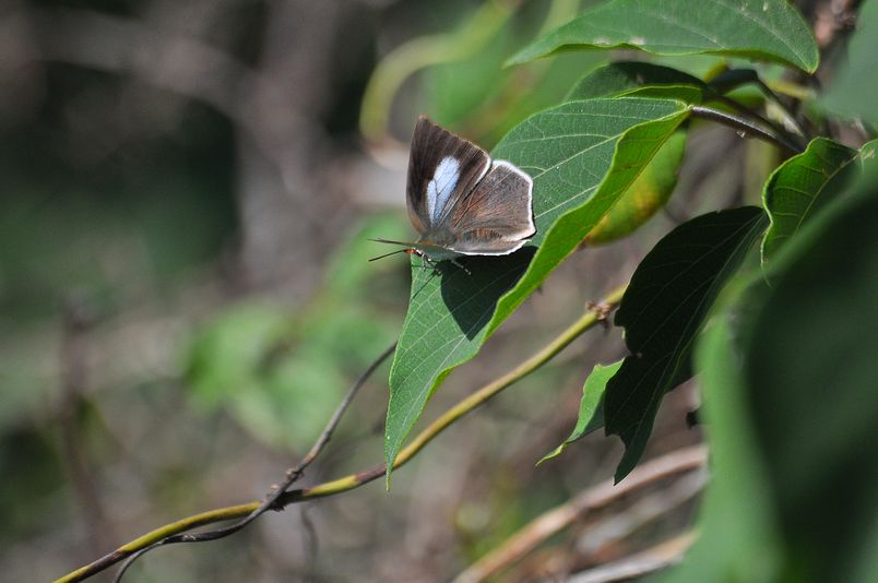 10月10日(晴れ)タイトル:和歌山の蝶その2_f0105542_11361460.jpg