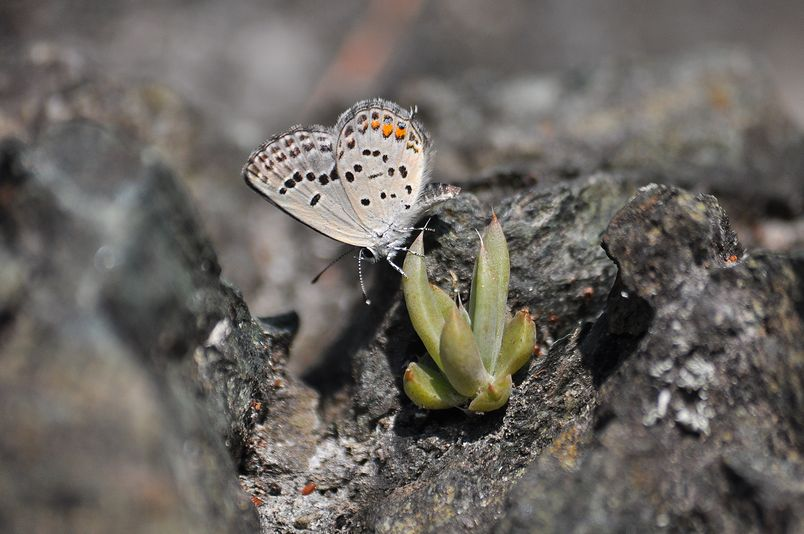 10月10日(晴れ)タイトル:和歌山の蝶その2_f0105542_11364711.jpg