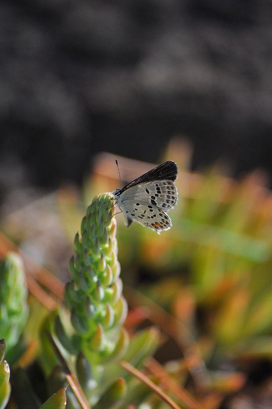 10月10日(晴れ)タイトル:和歌山の蝶その2_f0105542_11374269.jpg