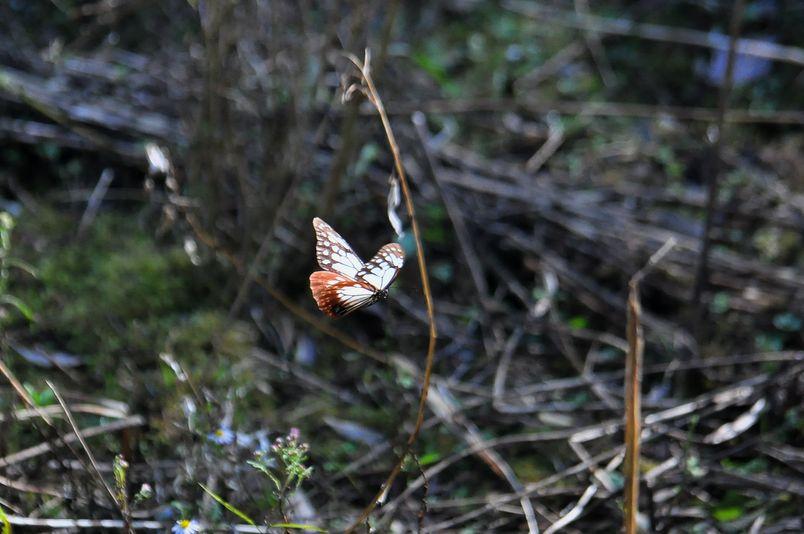 10月10日(晴れ)タイトル:和歌山の蝶その2_f0105542_11425869.jpg