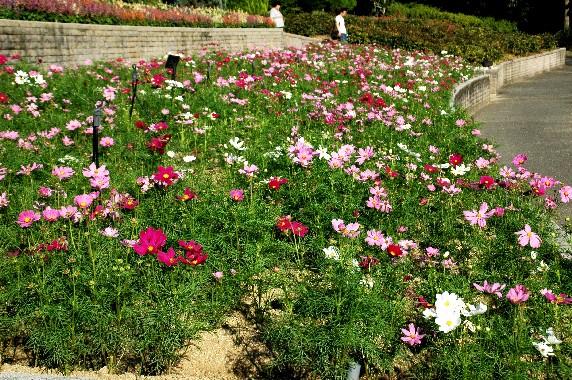 和歌山県植物公園緑花センター _b0093754_091959.jpg