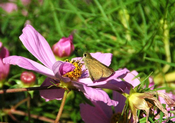 和歌山県植物公園緑花センター _b0093754_092628.jpg