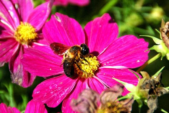 和歌山県植物公園緑花センター _b0093754_093561.jpg