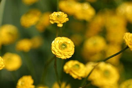 テスト用花