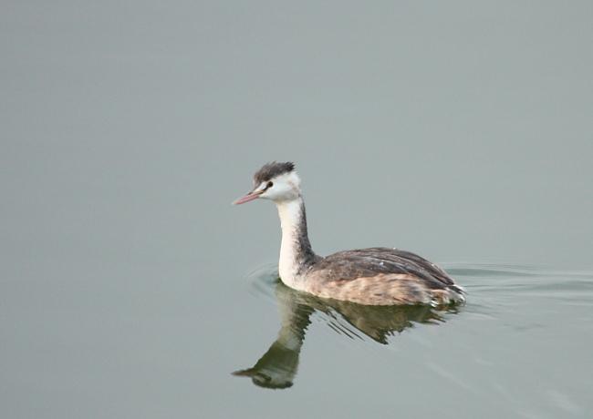 冬の渡り鳥到来、初撮り三種_c0217255_1327328.jpg