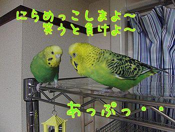 f0196665_026217.jpg