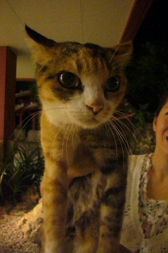 cat\'s eyes._c0153966_21592995.jpg