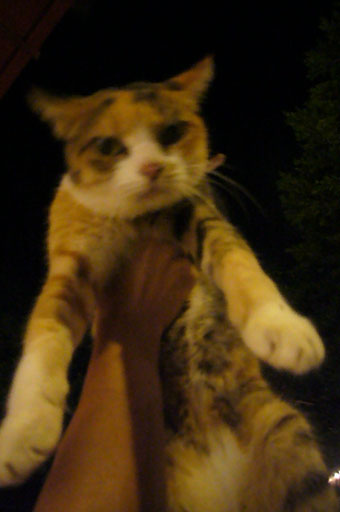 cat\'s eyes._c0153966_2211073.jpg