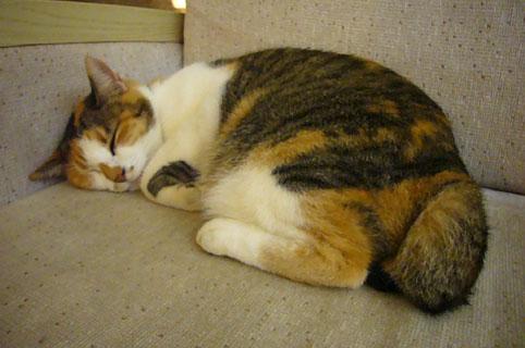 cat\'s eyes._c0153966_22145613.jpg