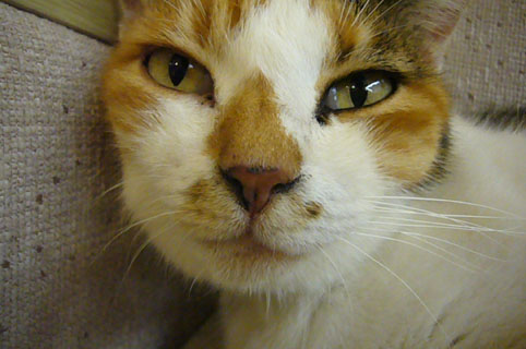 cat\'s eyes._c0153966_2235942.jpg