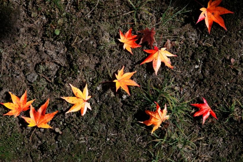 秋深まる_f0180878_19402179.jpg