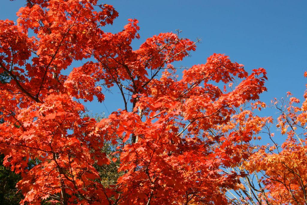 秋深まる_f0180878_1945850.jpg