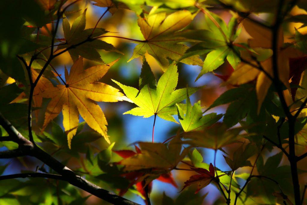 秋深まる_f0180878_1954144.jpg