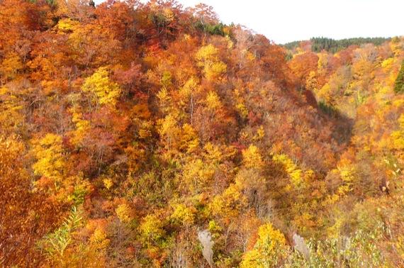 白神山系二ツ森紅葉_e0054299_10252924.jpg