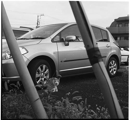 車と猫と_f0204015_23305023.jpg
