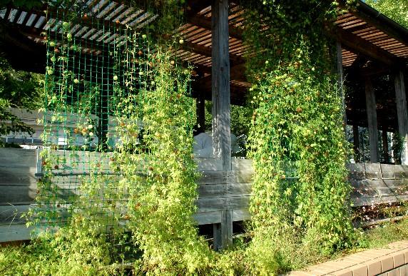 和歌山県植物公園緑花センター _b0093754_043226.jpg