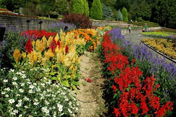 和歌山県植物公園緑花センター _b0093754_23575545.jpg