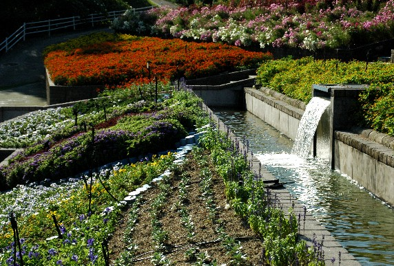 和歌山県植物公園緑花センター _b0093754_23581358.jpg