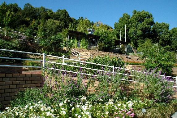和歌山県植物公園緑花センター _b0093754_2358428.jpg