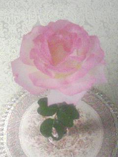 母が育ててくれた薔薇です_b0108363_20533643.jpg